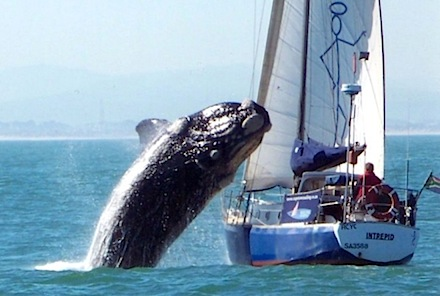whale incident1s.jpg