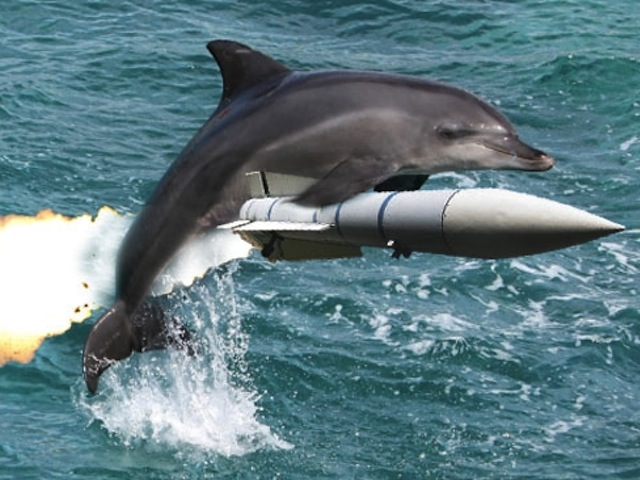 156089-dolphin-missile (1)