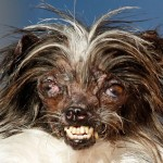 APTOPIX World's Ugliest Dog
