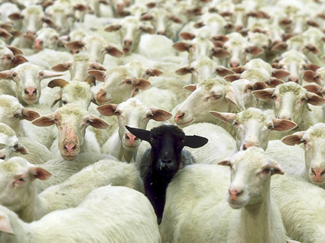 black-sheep-of-the-family