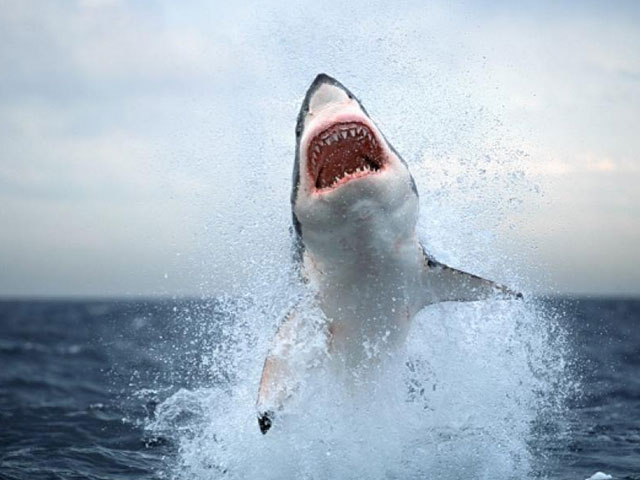south-africa-shark-attack