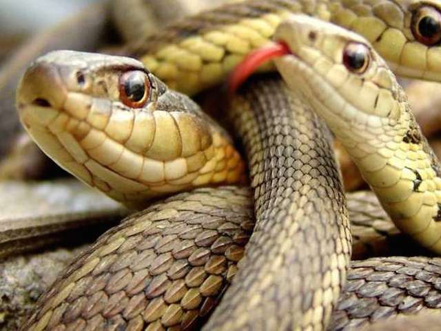 Snakes-4