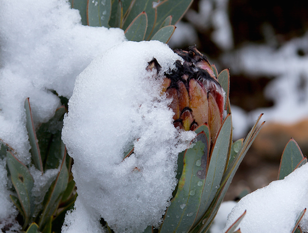 snow-matroosberg-6