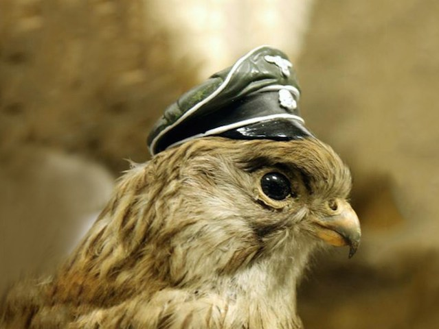falcon_nazi_hat_2014_05_22_extra_GalleryLarge
