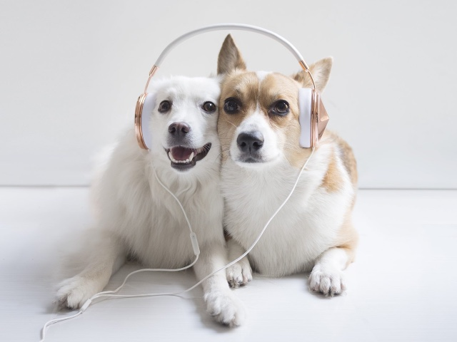 Spotify-Pet-Playlist
