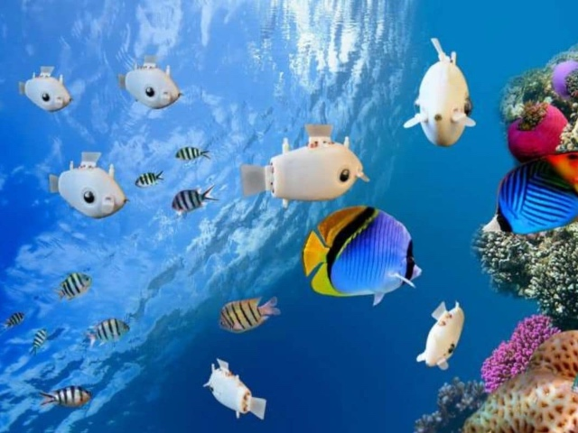 Our New Obsession: Robot Fish [Video] – 2oceansvibe News